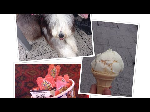 Rosie's first holiday ! Part 1 (Bearded Collie)