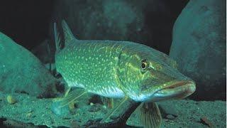 подводная охота осенью  spearfishing autumn