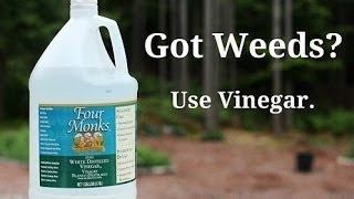 How to Kill Weeds Organically Using Vinegar and Other Methods