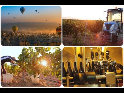 Kocabag Wines | Cappadocian Wines | Turkish Wine | Production | Vineyard | Vintage | Gülşehir Turkey