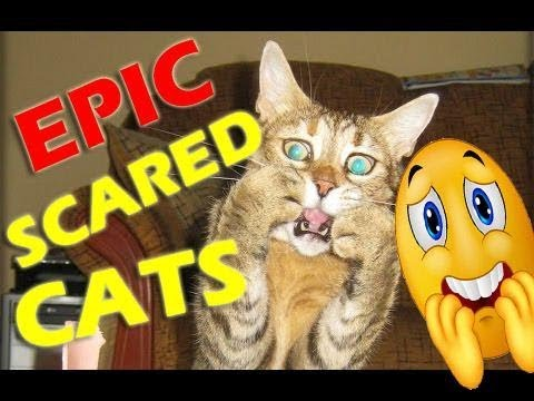 EPIC Funniest Scared Cats Compilation TRY NOT TO LAUGH