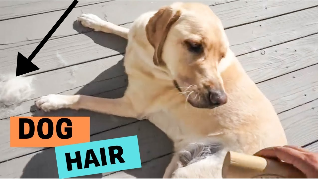 How Much Do Dogs Shed Youtube