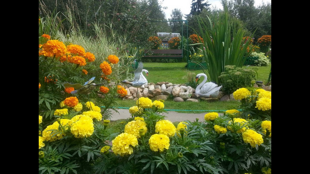 Цветы для сада фото дач в