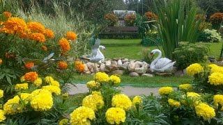 Цветы на даче. Дачи в цветах у наших дачников(Цветы - это самое лучшее украшение вашей дачи, двора, сада. Вот такие прекрасные цветочные дачи у наших дачни..., 2014-09-06T08:06:55.000Z)