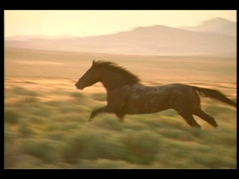 >> Watch Full Last of the Spanish Mustangs