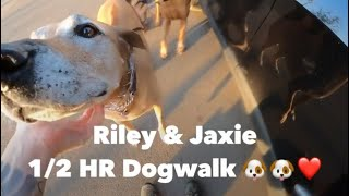 Riley & Jaxie | 1/2 HR Dogwalk | Ramona