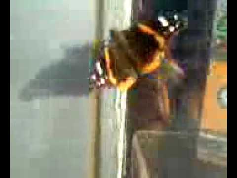 butterfly on frederick douglass blvd