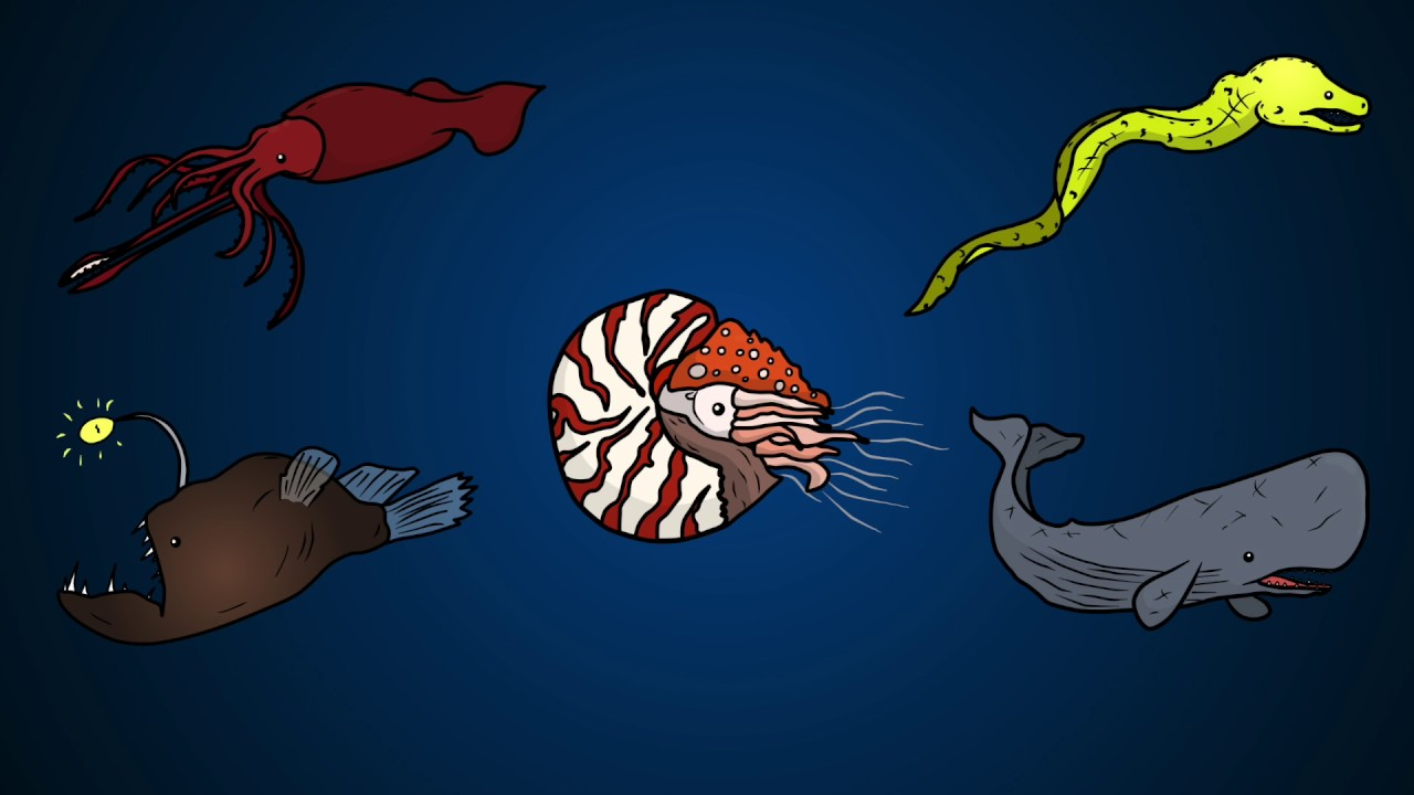 Draw Five: How to Draw Deep Sea Animals - YouTube
