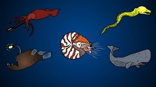 Draw Five: How to Draw Deep Sea Animals