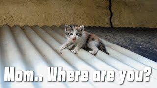 I Used a Translator On a Talkative Kitten (RESCUE ABANDONED KITTEN)