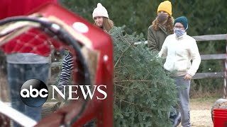 Family sets up Christmas tree lot to support small businesses   WNT