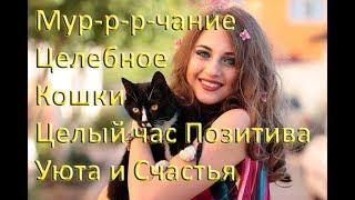 Мурлыканье Кошки Мурчание Лечащей Кошки Релакс Позитив Целый час счастья и расслабления!
