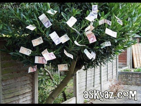 How to Grow Money on Trees