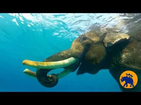 Trekking to Elephant Beach and Snorkeling