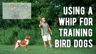 Using a Whip for Training Bird Dogs