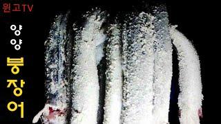155회 강릉 동해 속초 양양 바다 해변원투낚시 대물!?핫!붕장어! 마릿수!포인트!  South Korea Surf-Casting