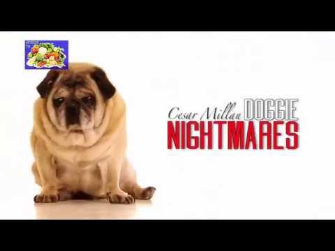 Cesar Millan (dog whisperer) DOGGIE NIGHTMARES