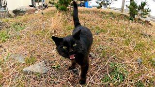 一旦は逃げた黒猫だったが戻ってきて強烈に甘えるようになった