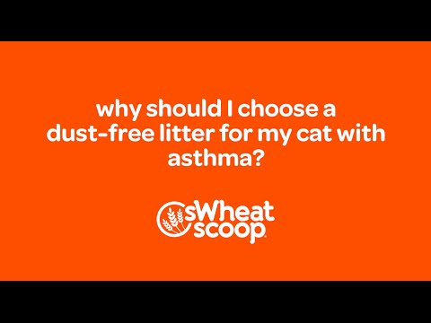 Why Should Choose Dust Free Litter For My Cat With Asthma