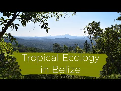 Tropical Ecology in Belize