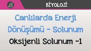 Canlılarda Enerji Dönüşümü - Solunum - Oksijenli Solunum -1