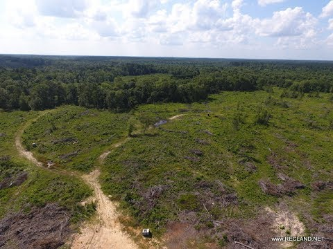 100 +/- ac - Panola County Texas Timberland for Sale at RecLand.net