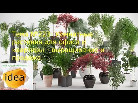 Комнатные растения для офиса и квартиры - выращивание и продажа