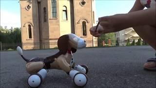 Собака Робот, Макс играет с собакой Zoomer!