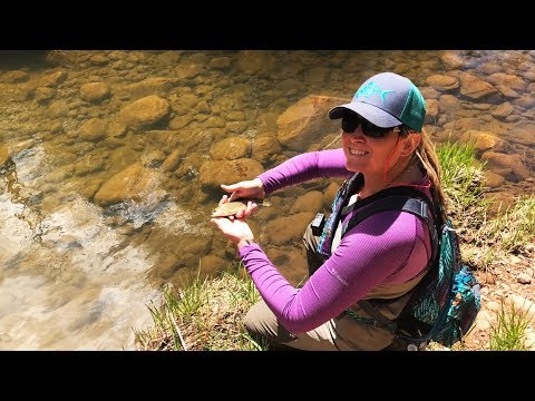 Fly Fishing Arizona Trout Stream (Light Rods For Small Stream Fish!)