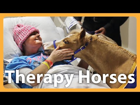 Miniature Horses Are New Type Of Therapy Animal