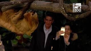 Two-toed Sloth Moe's New Tree - Cincinnati Zoo