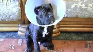 Воспитание щенка: азы дрессировки . Все О Домашних Животных.