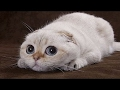 ailamalia  funny cats   crazy animal videos compilation august 2015   animals tv