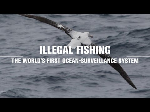 Enlisting Albatrosses To Fight Illegal Fishing