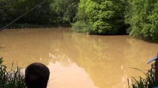 AMAZON WOOD FISHERY, POLEGATE, EAST SUSSEX