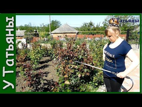 НАШАТЫРНЫЙ СПИРТ от ТЛИ на розах, плодовых деревьях, кустарниках и других растениях!