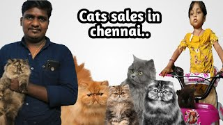 Cat sales in Chennai..(Kitten to Adult) in Tamil video