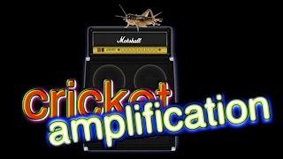 cricket amplification