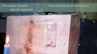 Powder post beetle treatment