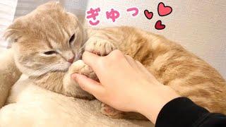 短足猫がギュッと手を握って離さないので、握り返してみると…