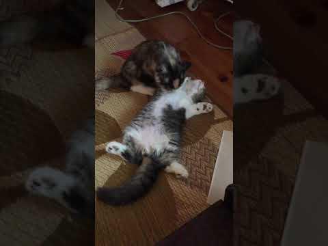 仲良し猫ちゃんのグルーミング