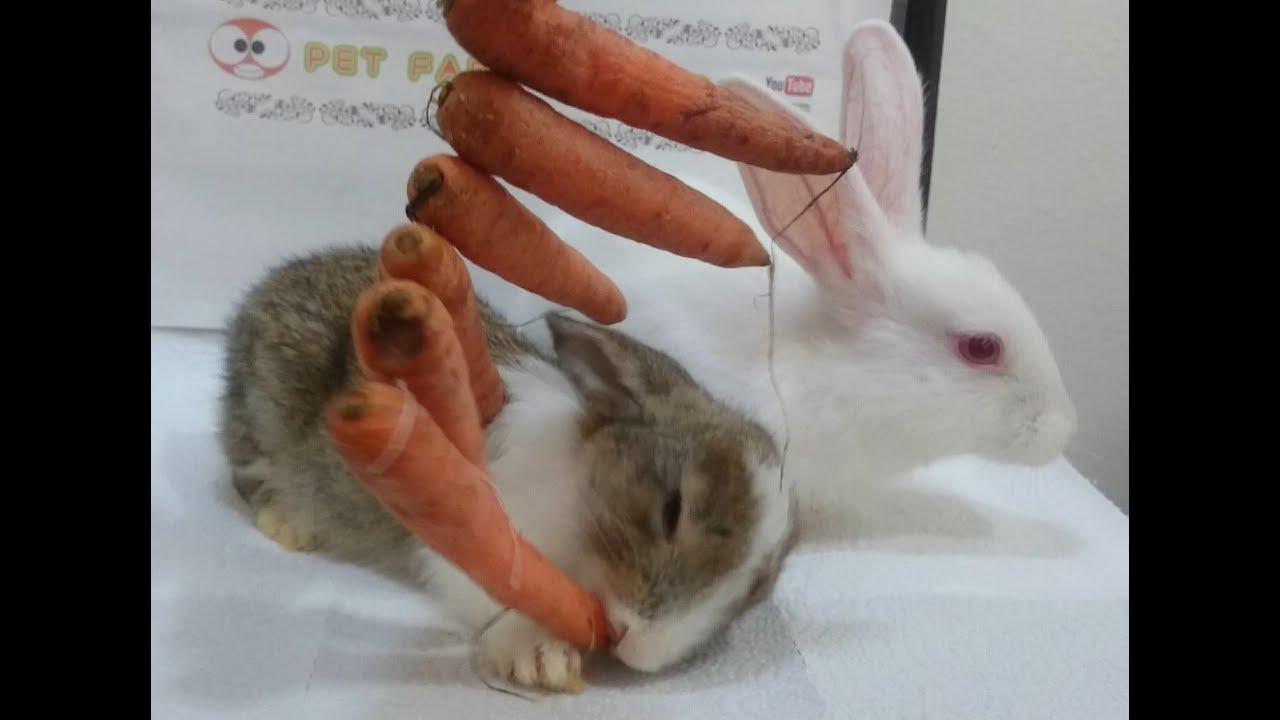 Adult rabbit food eats, nude females assholes fucking
