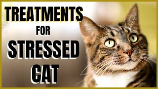 Cats 101 : Treatments for Stressed Cats
