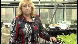 Выращивание салата в теплице. Кассетный способ выращивания. Сорта,грунт,подкормка.