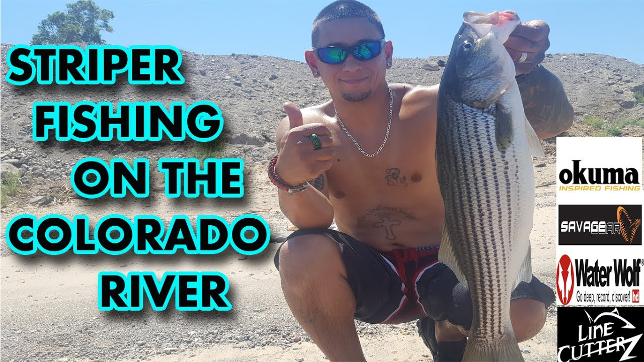Summer Striper Fishing Is Crazy On The River Right Now Colorado River