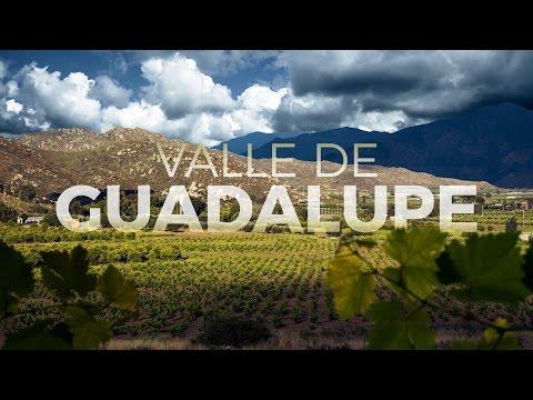 Valle de Guadalupe: Viaja y descubre la ruta del vino