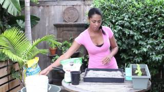 How to Germinate Celery Indoors : Garden Seed Starting