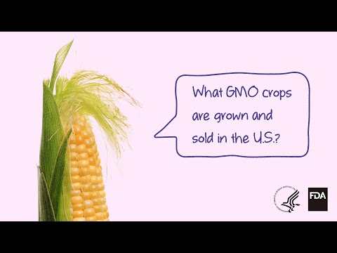 Agricultural Biotechnology: What GMO Crops Are Grown And Sold?