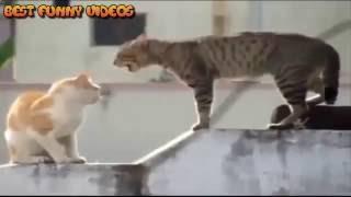 Самые смешные ролики про животных, приколы про кошек 2016