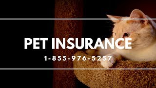 Pet Insurance Patchogue NY - Best Dog Insurance For Dogs